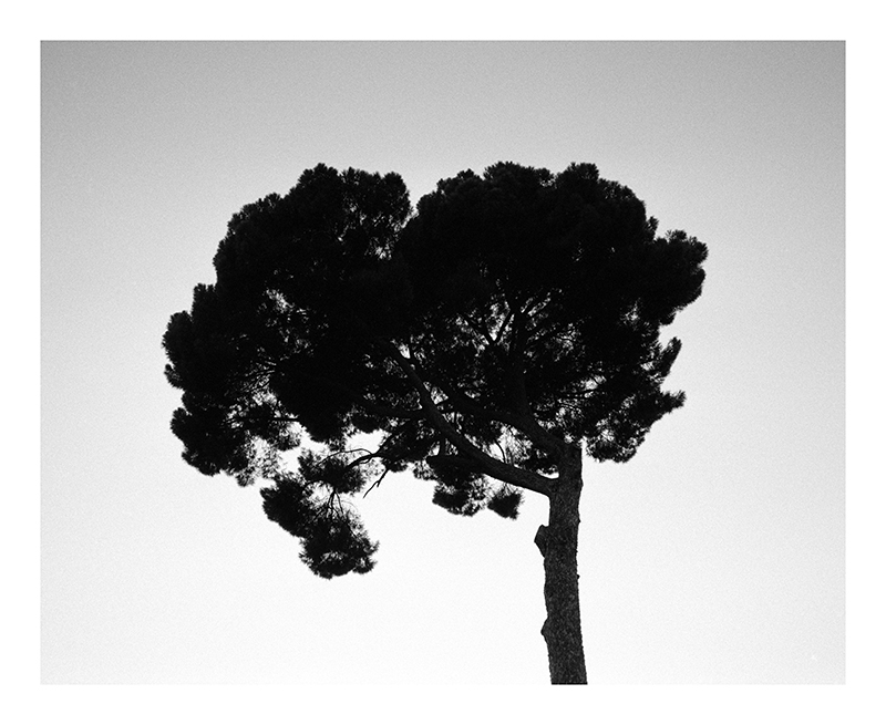 http://www.abelszalontai.com/files/gimgs/34_rome-diary-pinea.jpg