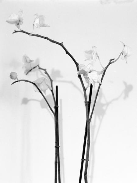 http://www.abelszalontai.com/files/gimgs/35_web-philia-orchidea.jpg